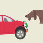 Бибика — Кошка, собака, хомячок, черепаха